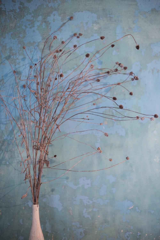 fall beauties-0788.jpg