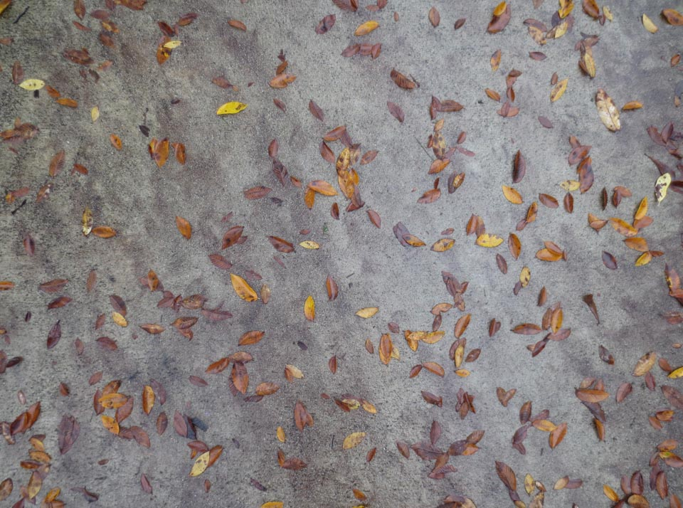 RW_wet leaves-2085.jpg