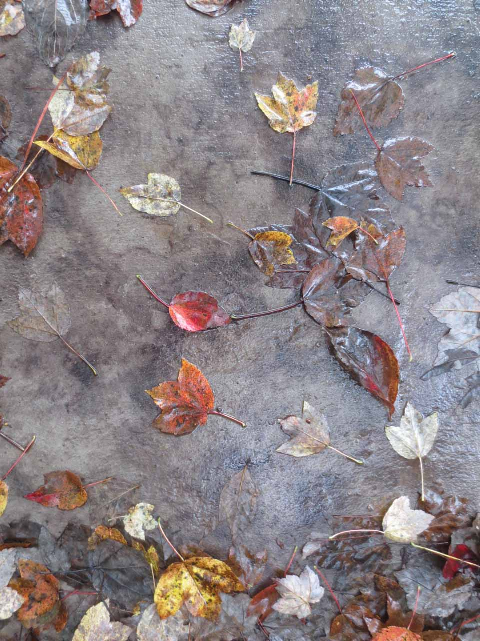 RW_wet leaves-2108.jpg