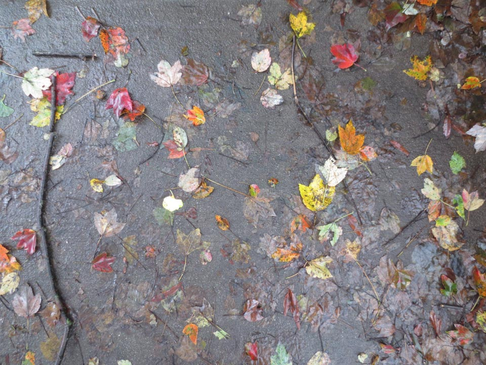 RW_wet leaves-2140.jpg