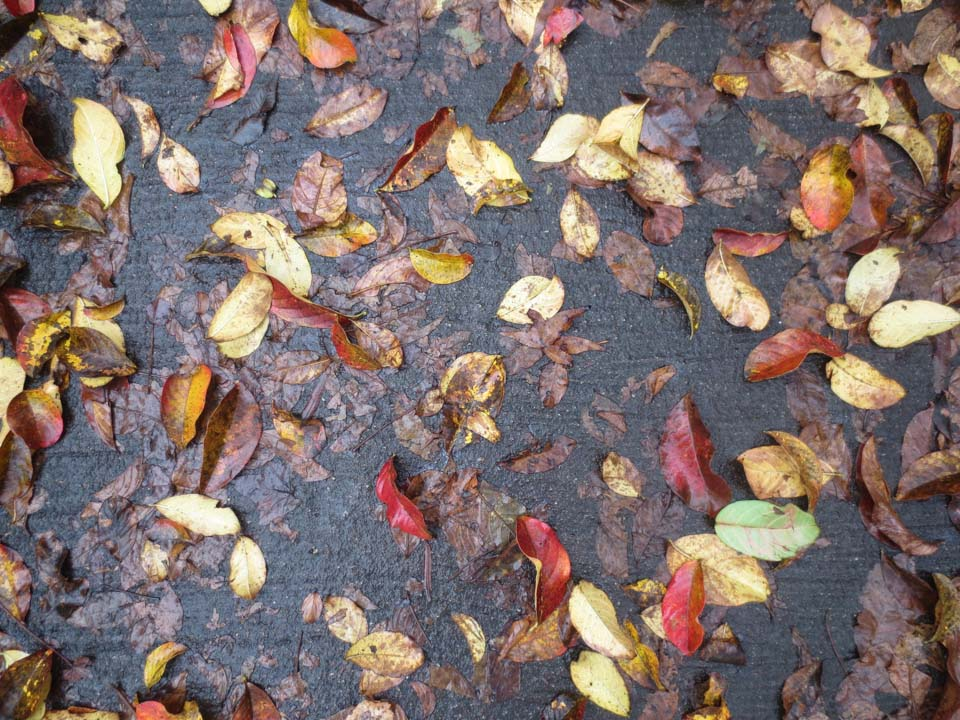 RW_wet leaves-2123.jpg