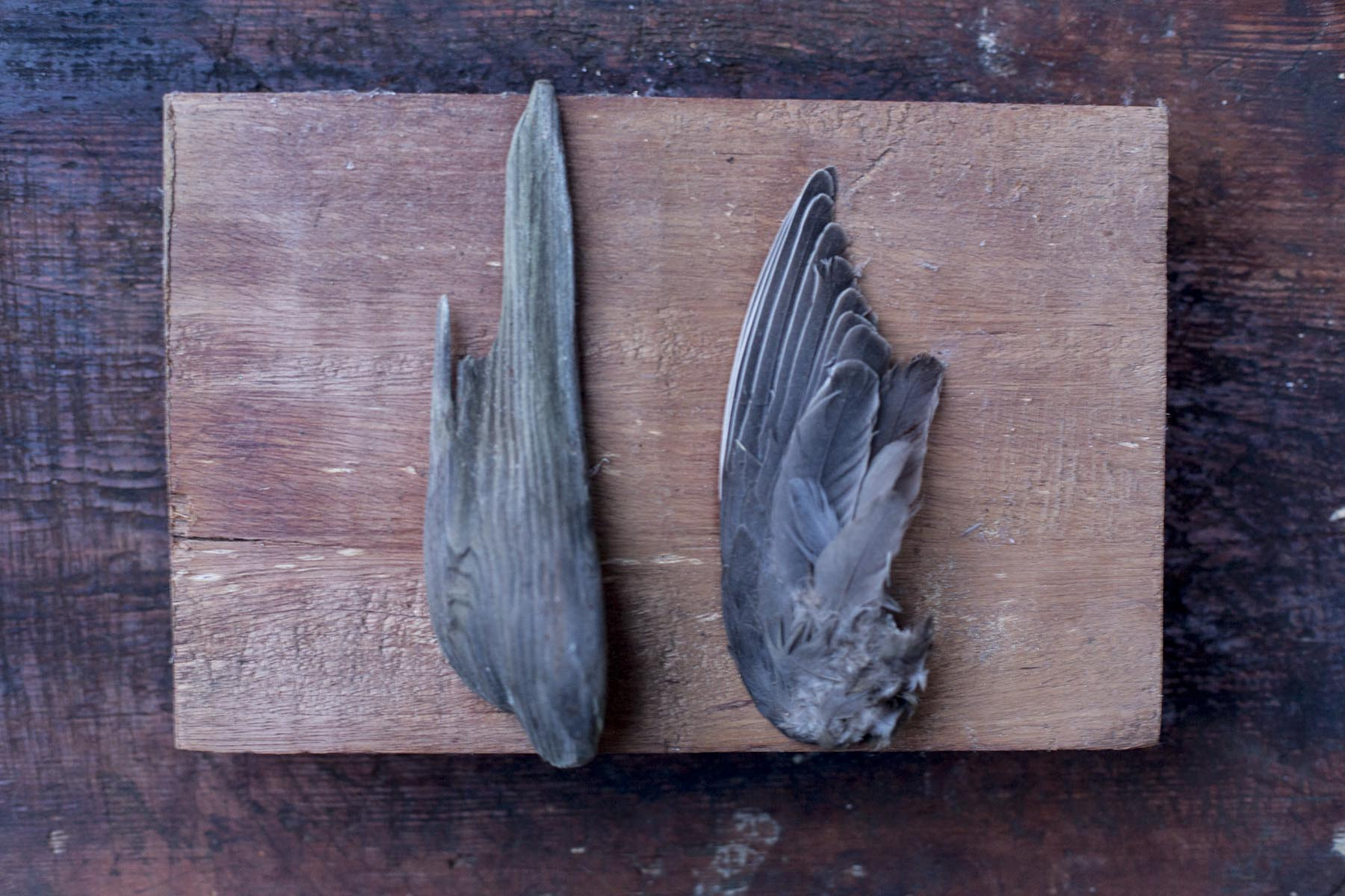 rinne: one day, i found both this bird's wing and this piece of wood at different times. they sit side by side in my studio, mirroring each other.