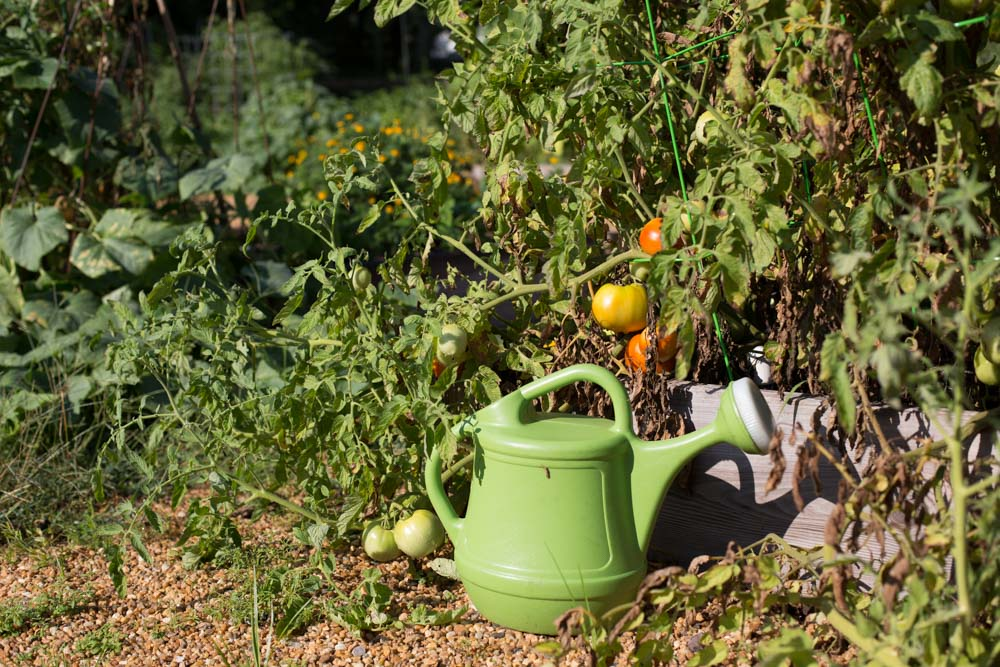KB_winterville-community-garden-6909.jpg