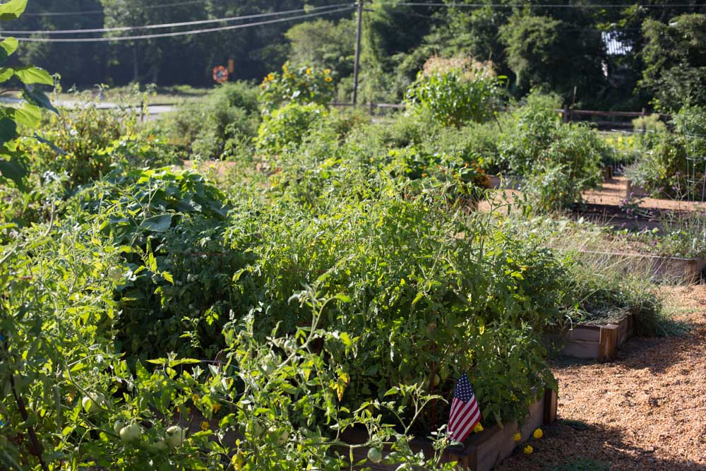 KB_winterville-community-garden-6925.jpg