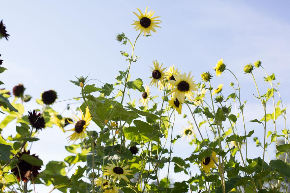KB_winterville-community-garden-6927.jpg