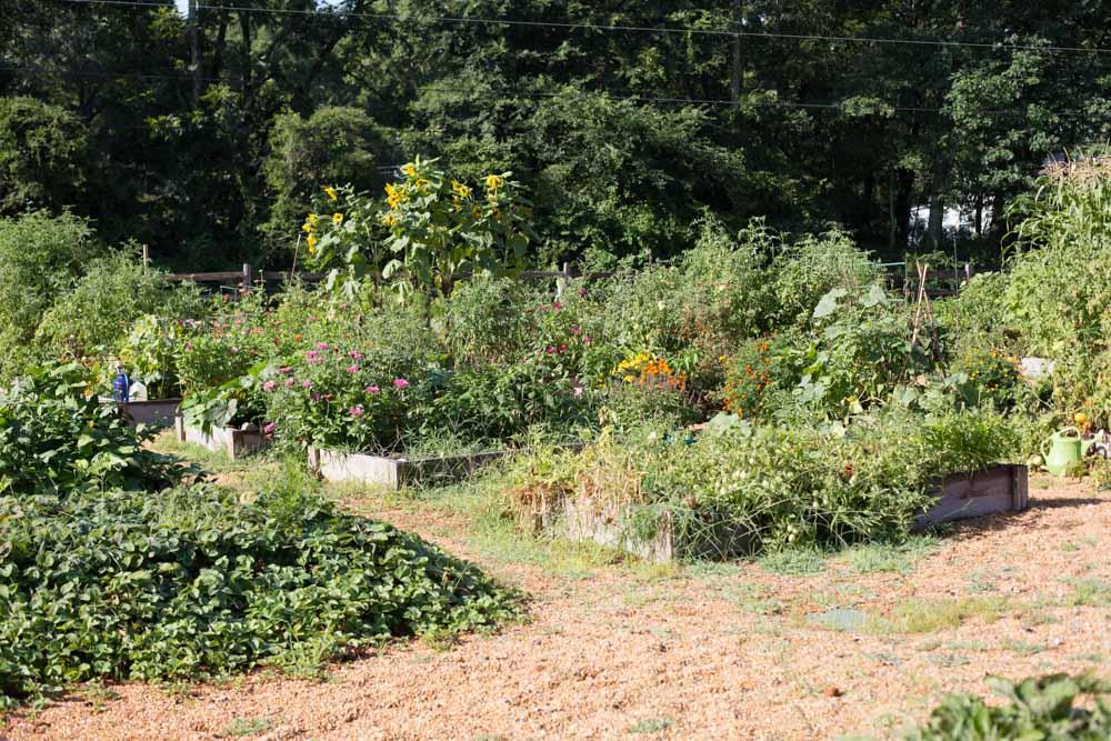 KB_winterville-community-garden-6935.jpg
