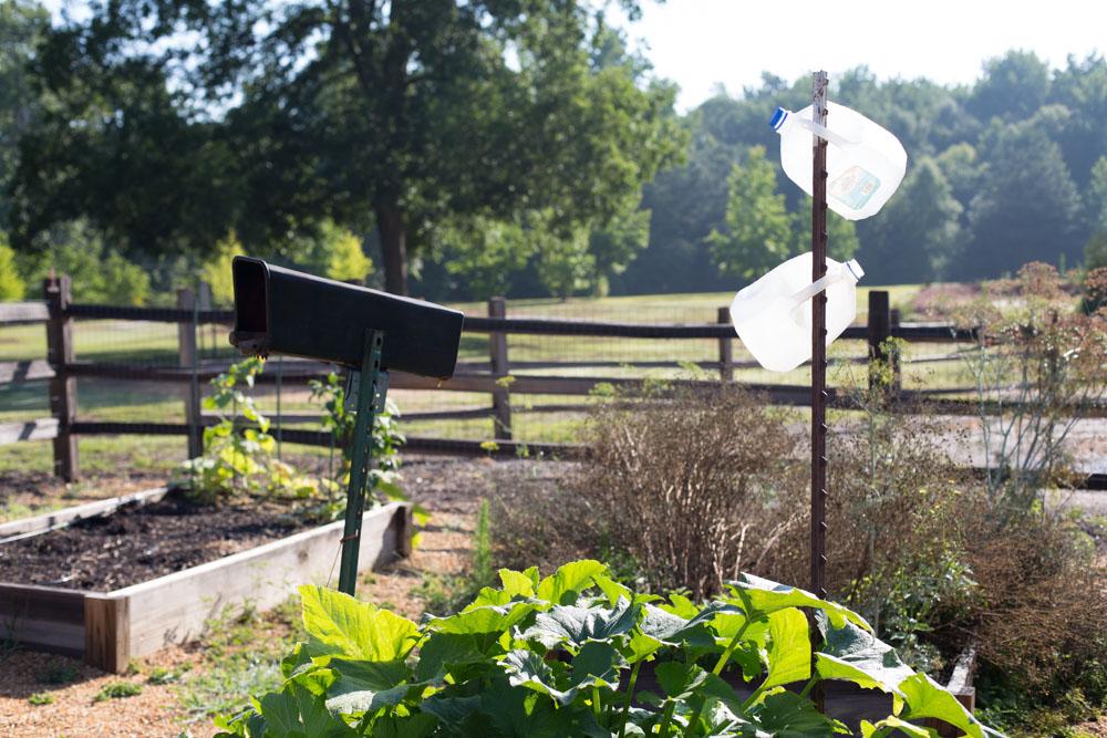 KB_winterville-community-garden-6930.jpg