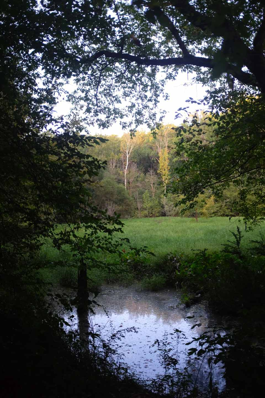 secret meadow-2650.jpg