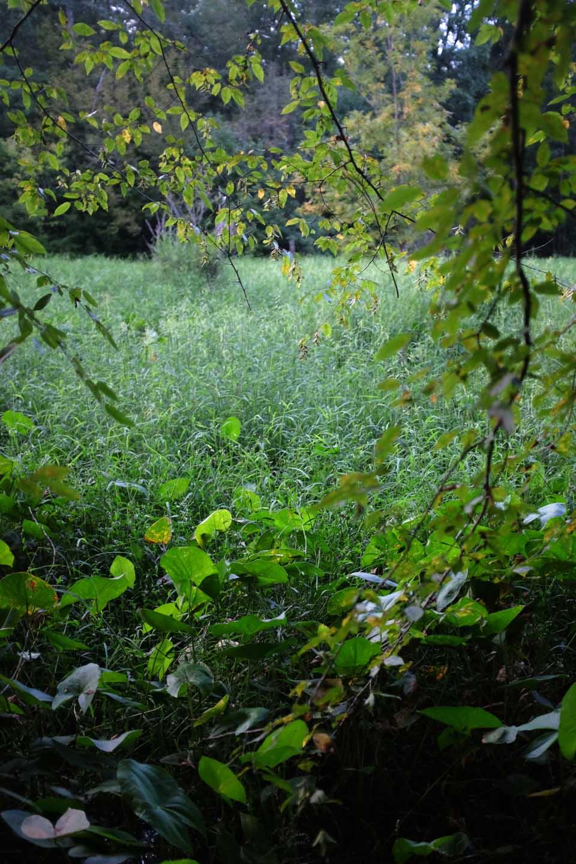 secret meadow-2656.jpg