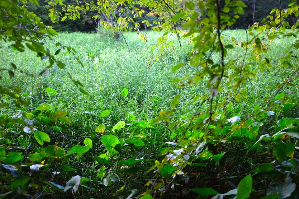 secret meadow-2657.jpg