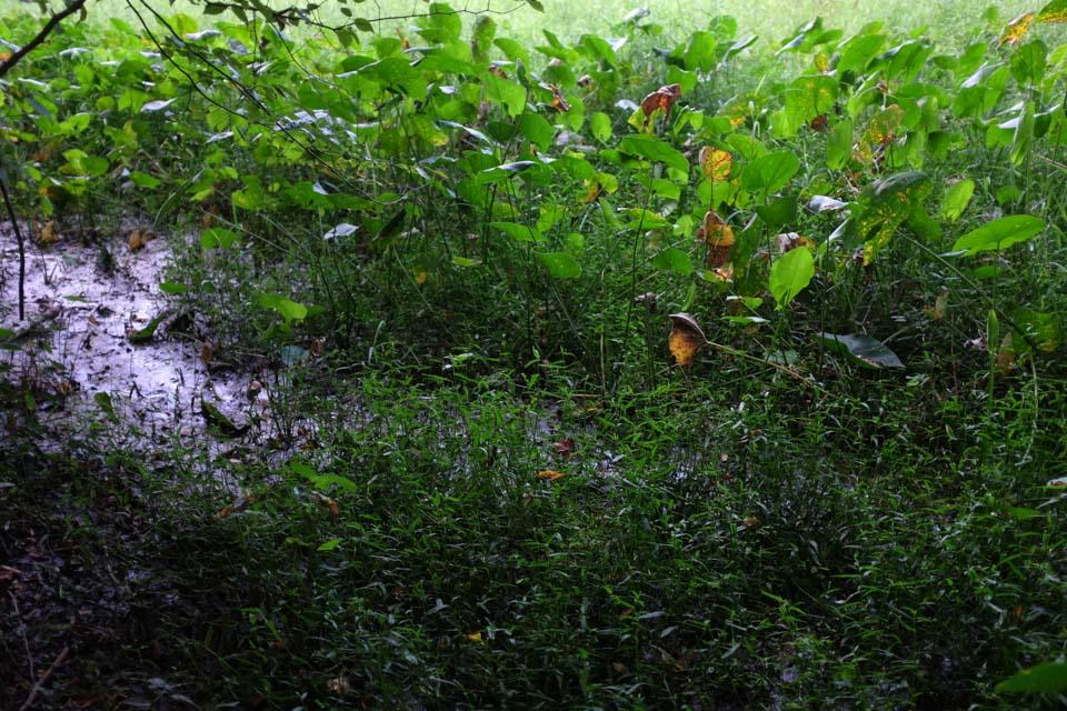 secret meadow-2664.jpg