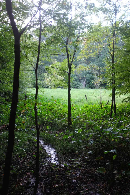 secret meadow-2667.jpg