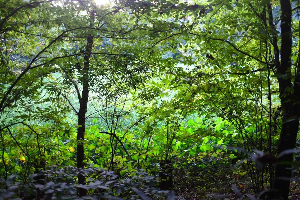 secret meadow-2670.jpg