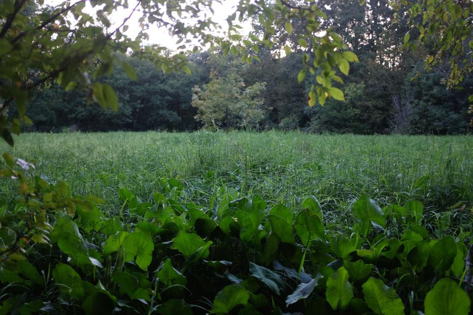secret meadow-2675.jpg
