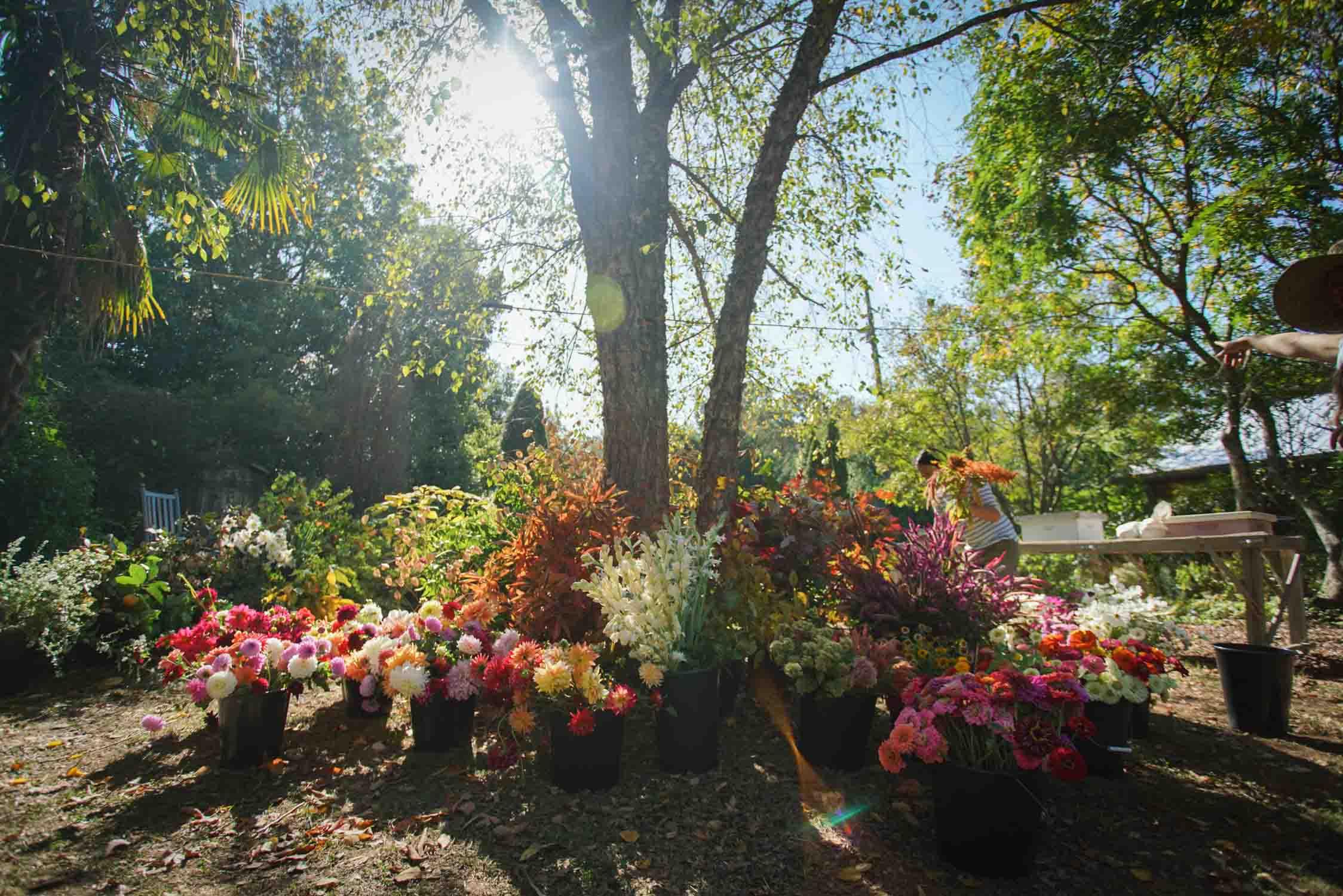 RA_3 porch farm 2016 flower social-2016101708939.jpg