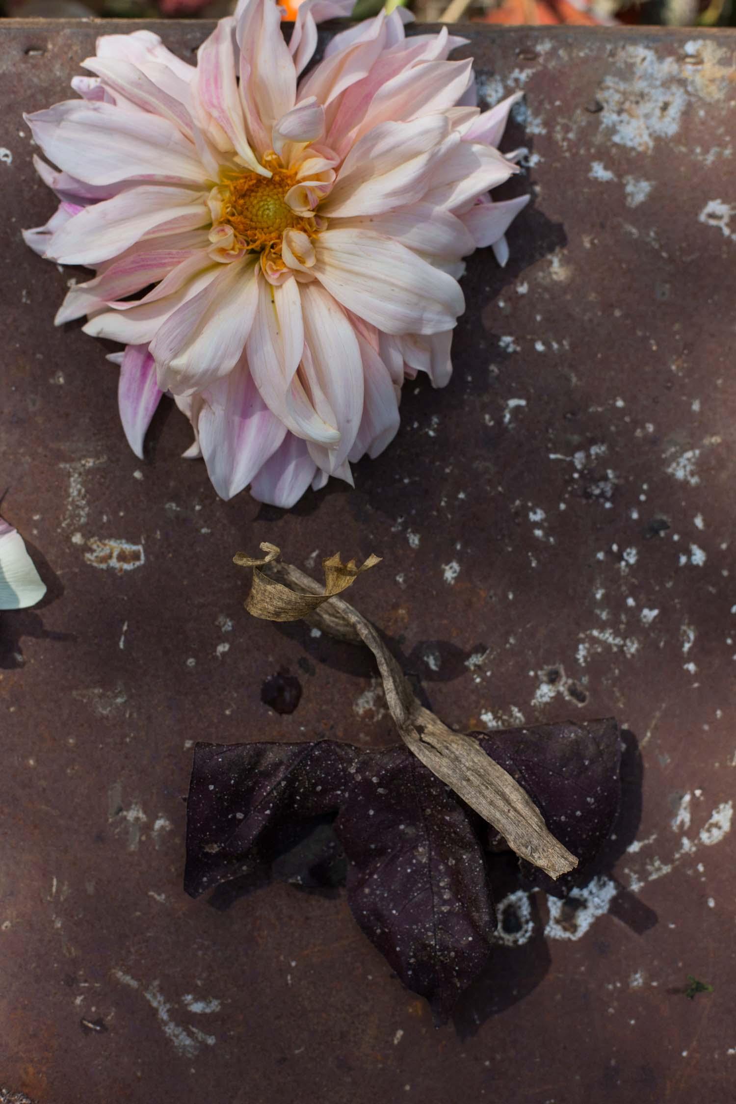 RA_3 porch farm flower social-201610175046.jpg