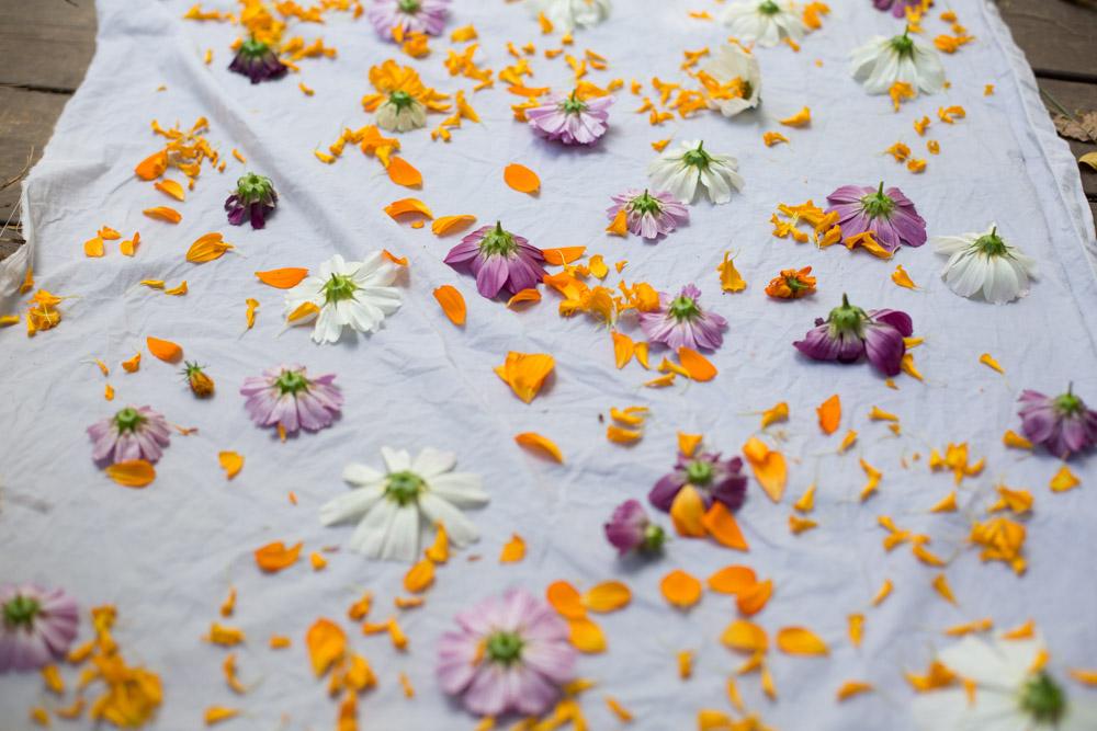 KB_dyeing-flowers-9625.jpg