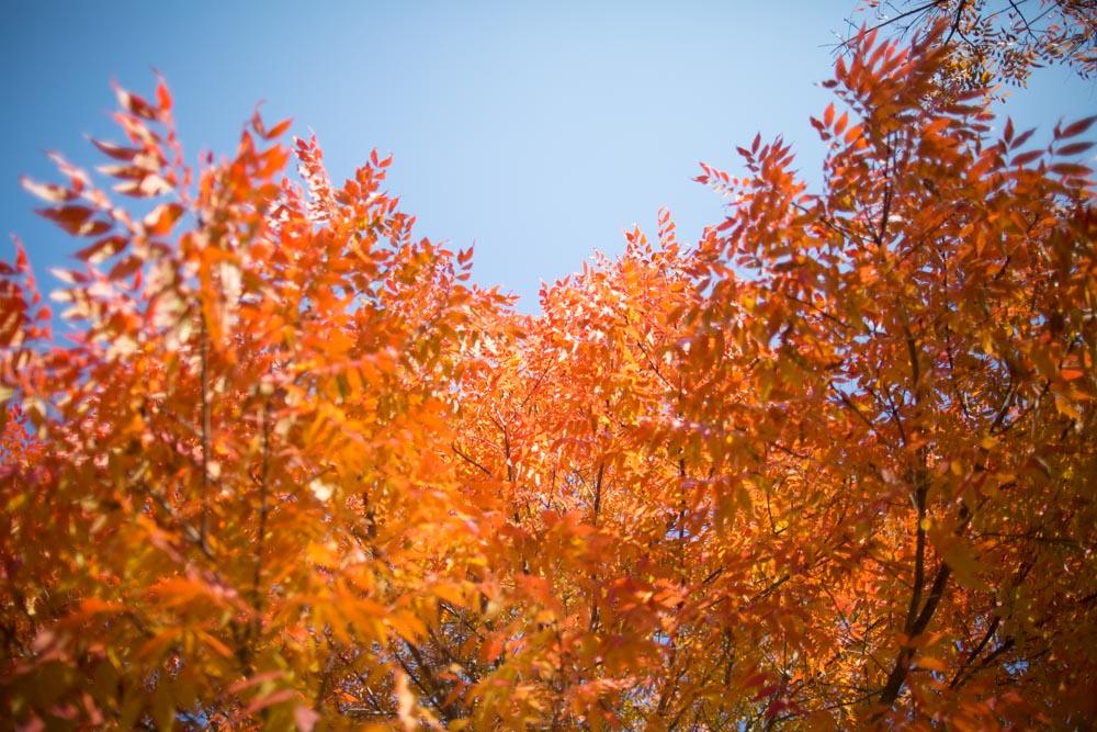KB_colors-of-fall-0276.jpg