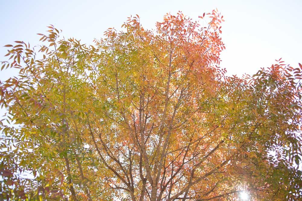 KB_colors-of-fall-0279.jpg