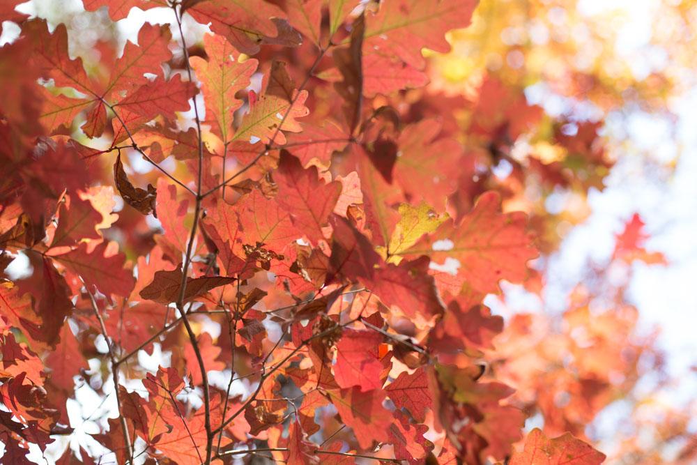 KB_colors-of-fall-0286.jpg