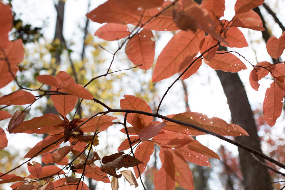 KB_colors-of-fall-0290.jpg