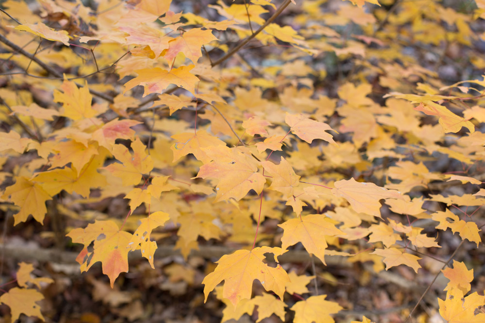 KB_colors-of-fall-0295.jpg