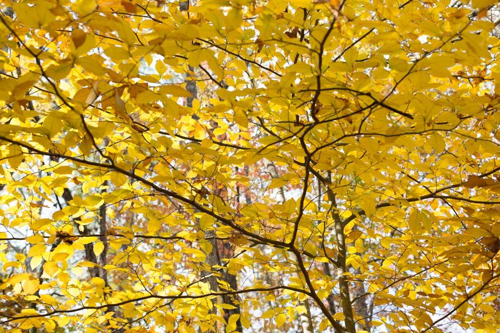 KB_colors-of-fall-0302.jpg