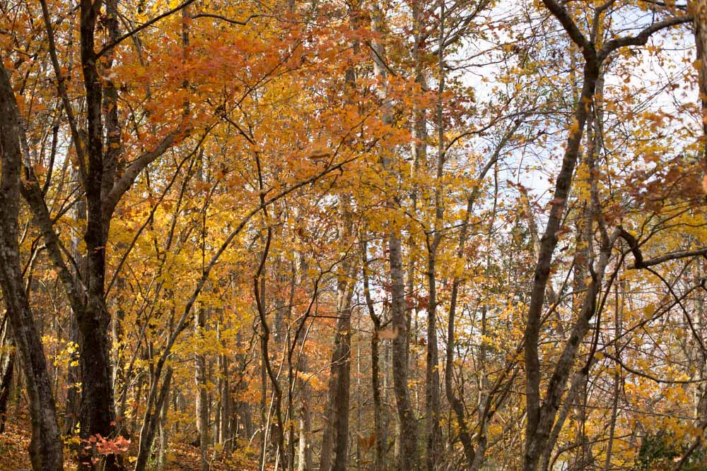 KB_colors-of-fall-0308.jpg