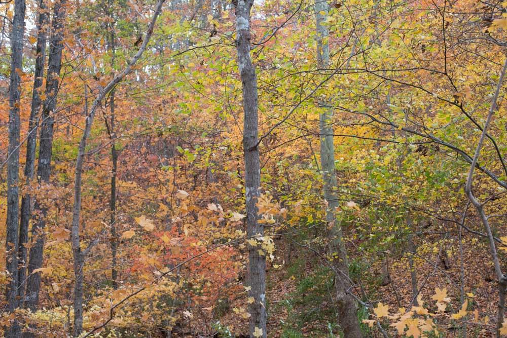 KB_colors-of-fall-0317.jpg