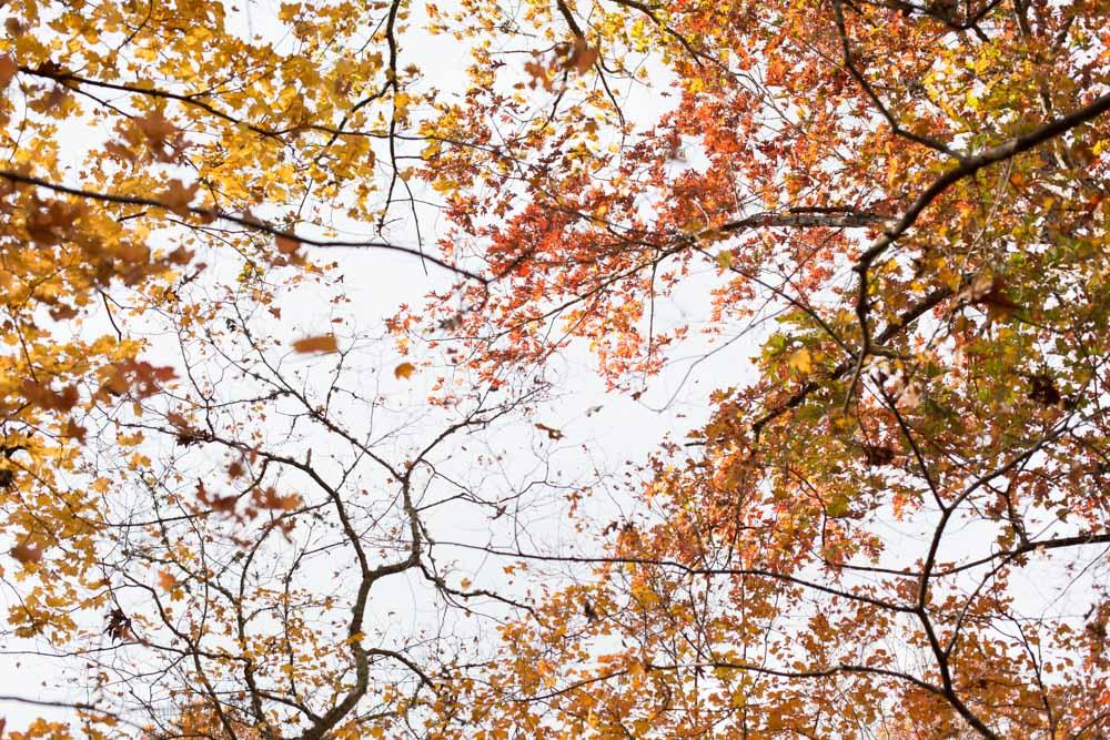 KB_colors-of-fall-0311.jpg