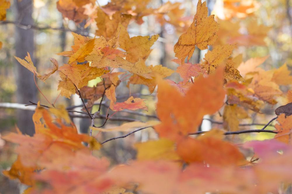 KB_colors-of-fall-0350.jpg