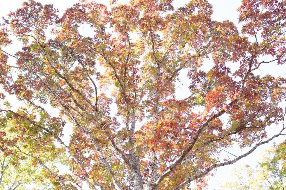 KB_colors-of-fall-0351.jpg