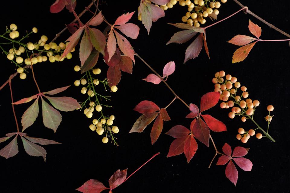rw-fall arrangement-4903.jpg