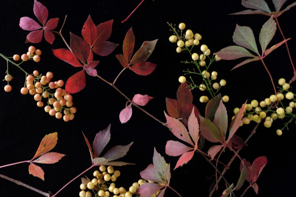 rw-fall arrangement-4898.jpg