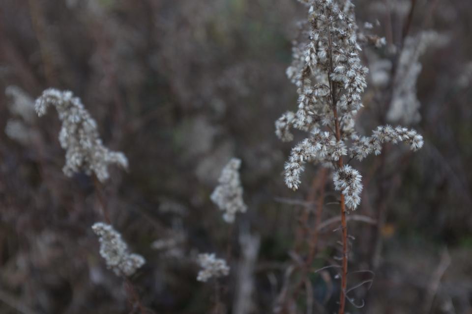 rw white flowers-5352.jpg