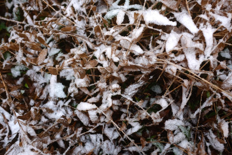 rw-snow patterns-5884.jpg