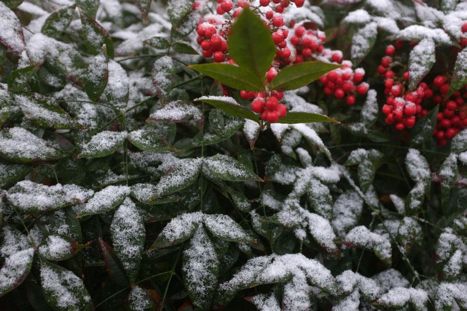 rw-snow patterns-5895.jpg