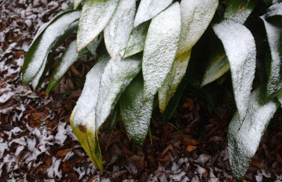 rw-snow patterns-5909.jpg