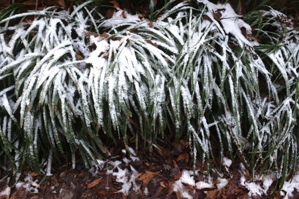 rw-snow patterns-5933.jpg