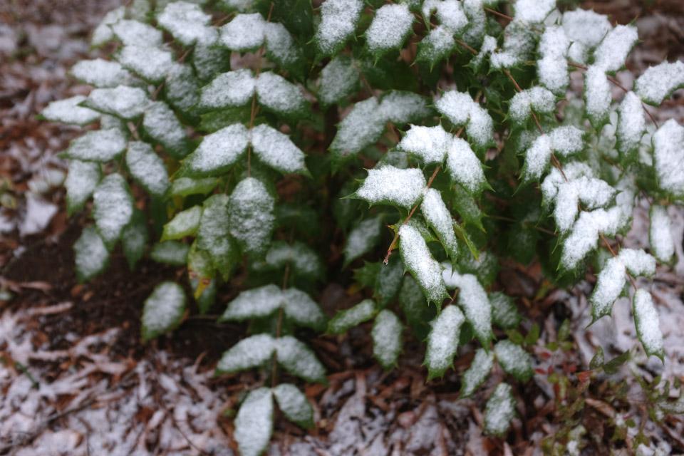 rw-snow patterns-5939.jpg