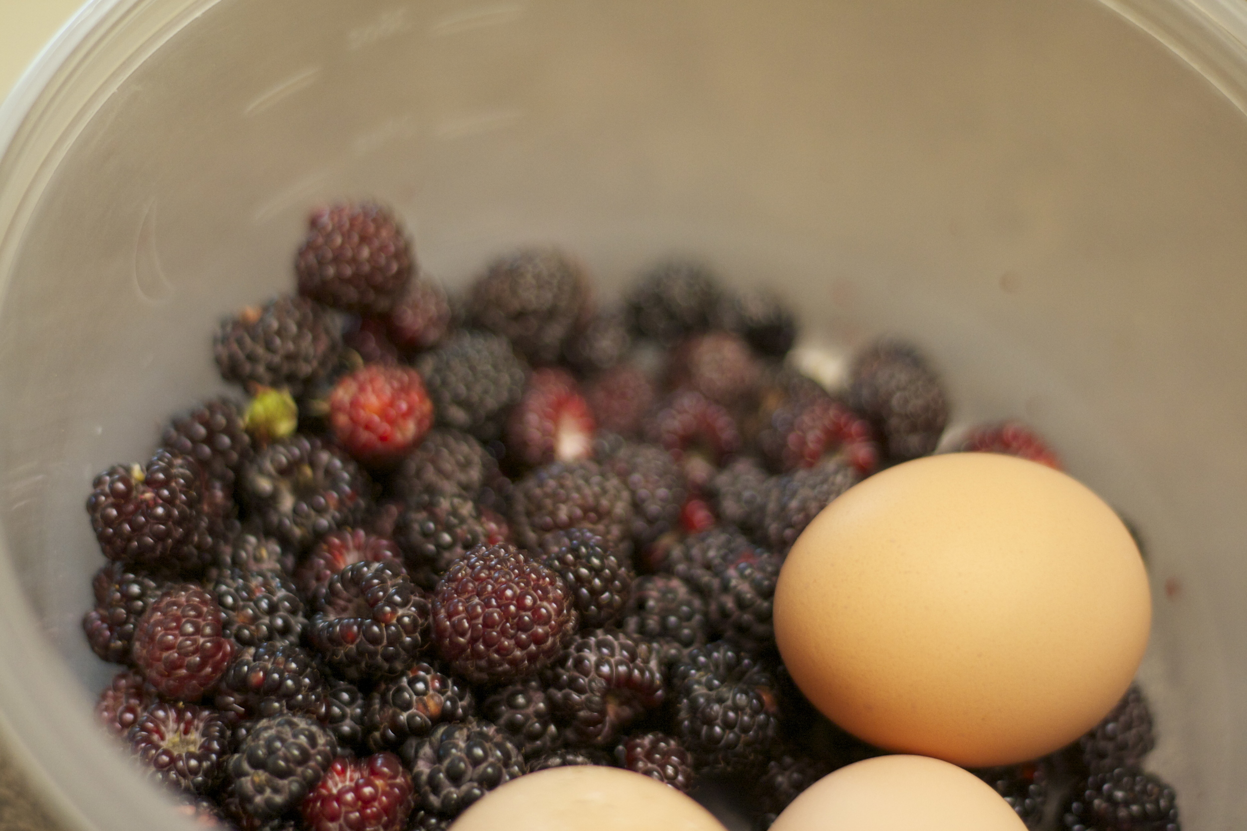 Fresh blackberries and eggs!