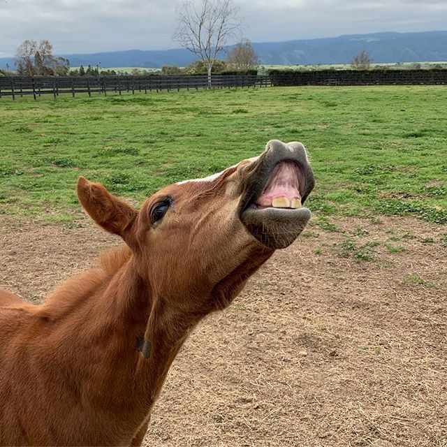 That feeling when only one more day until Friday 🤗 #foalwatch #balabali