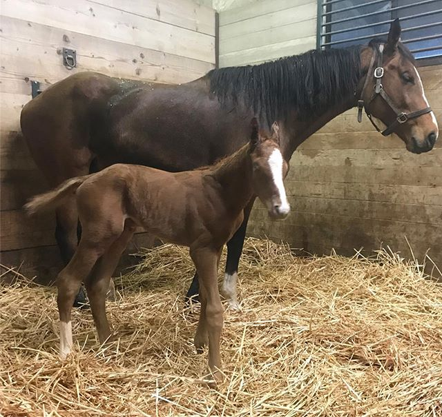 Nice lookin' colt by #misremembered  #foalwatch