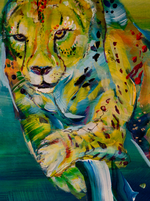cheeta-2.jpg
