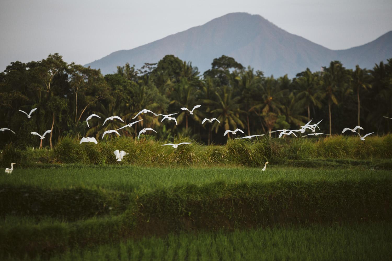 Bali 2018 (52).jpg