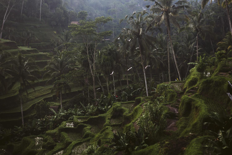 Bali 2018 (346).jpg