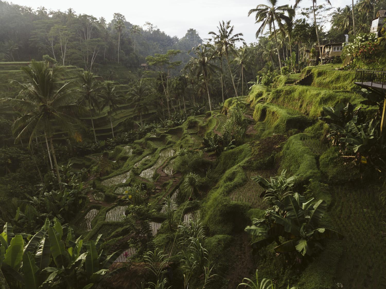 Bali 2018 (369).jpg