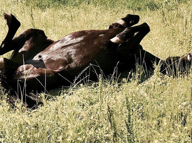 Lazy Sunday at the #psdranch! #happy #sierra