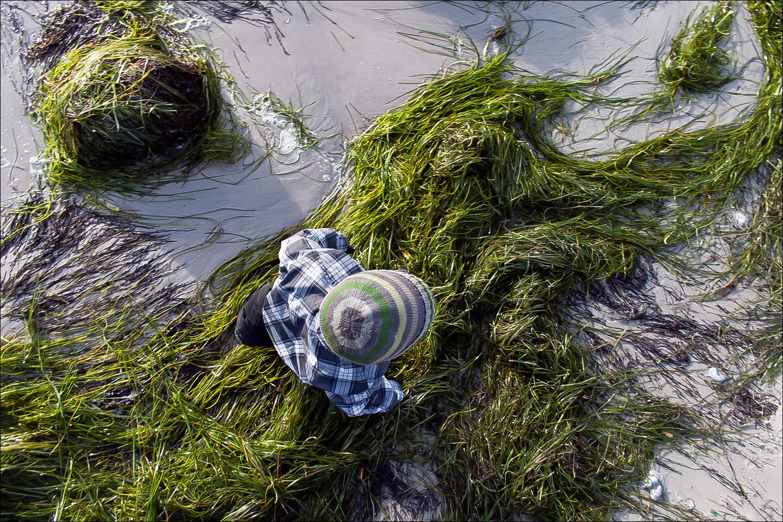 Walking on Seaweed