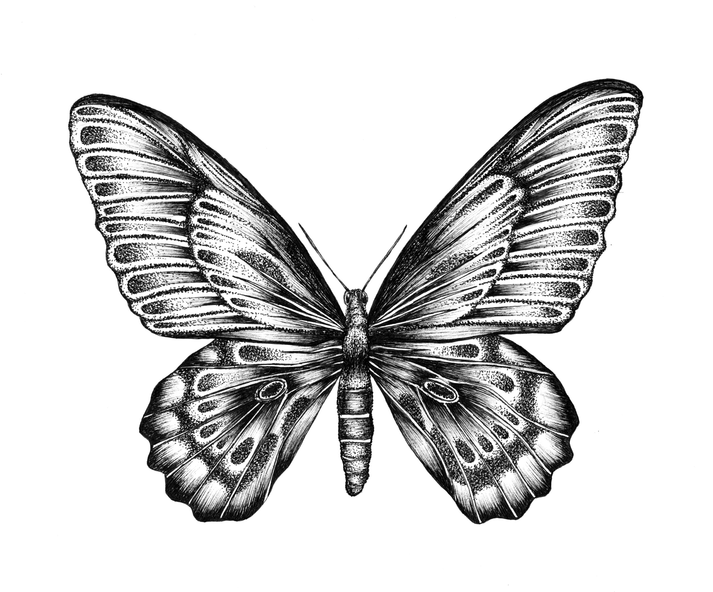 illustration1_papillon.jpg